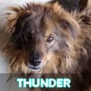 Association Remember Me France : sauver et adopter un chien roumain Thunde72