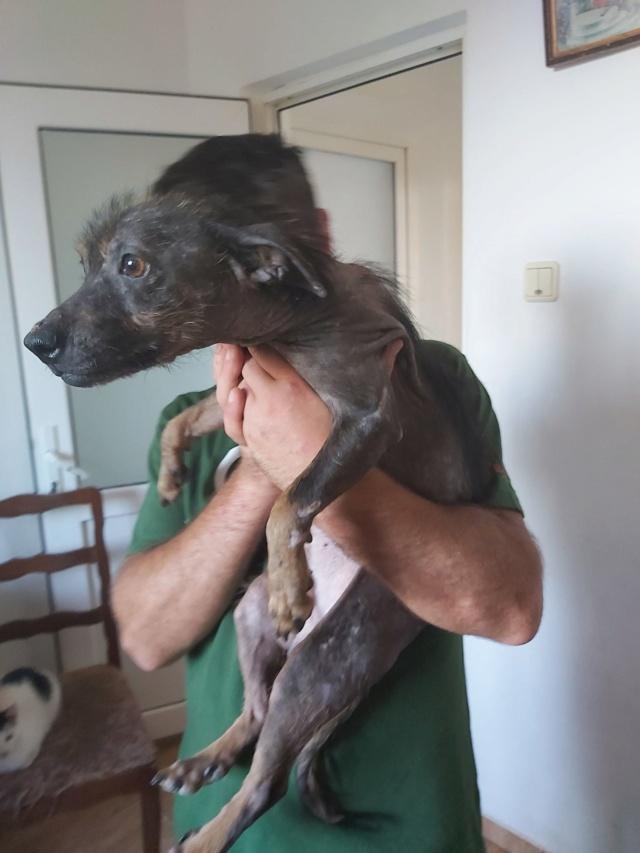 PTITLOUP (ex TIGANU) - Mâle, croisé de petite taille - né environ en novembre 2011 - Adopté par Gilles (69)  Tiganu23