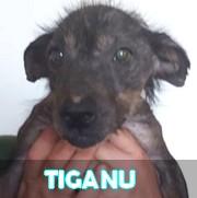 Les adultes de petite taille en Roumanie en un clin d'oeil Tiganu26