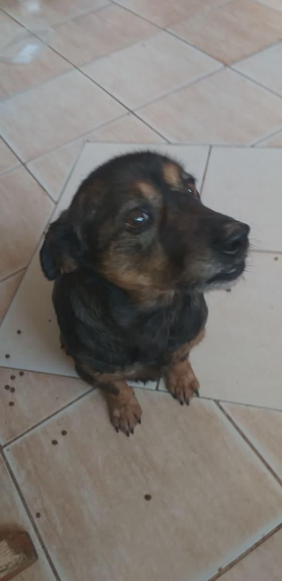 PTITLOUP (ex TIGANU) - Mâle, croisé de petite taille - né environ en novembre 2011 - Adopté par Gilles (69)  Tiganu42