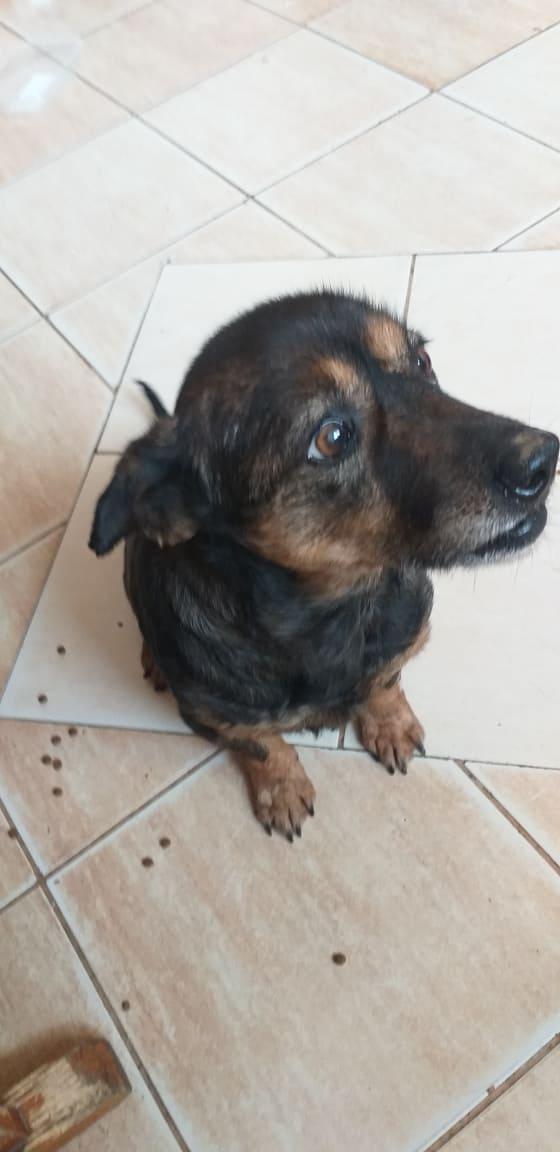 PTITLOUP (ex TIGANU) - Mâle, croisé de petite taille - né environ en novembre 2011 - Adopté par Gilles (69)  Tiganu43