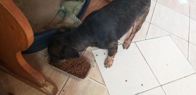 PTITLOUP (ex TIGANU) - Mâle, croisé de petite taille - né environ en novembre 2011 - Adopté par Gilles (69)  Tiganu45