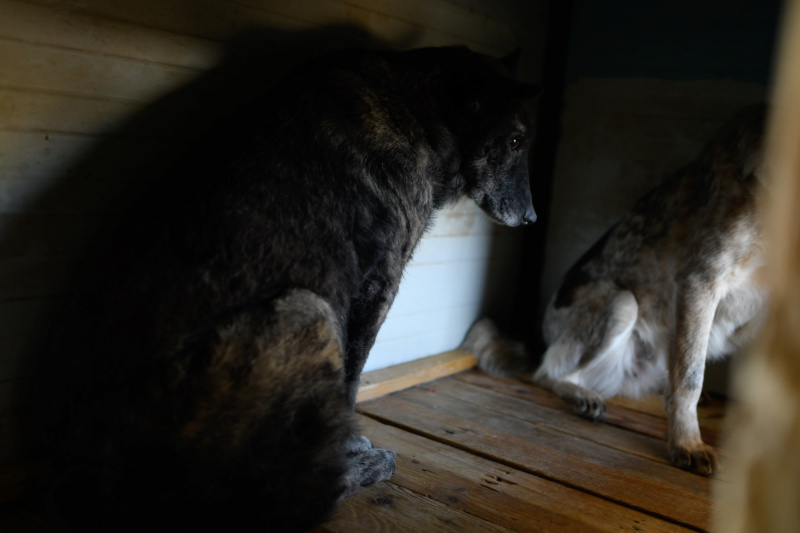 TIGRETTE - femelle croisée de taille moyenne, née en 2009 ( PASCANI) - REMEMBER ME LAND Tigret15