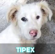 Les chiots en roumanie en un clin d'oeil  Tipex11