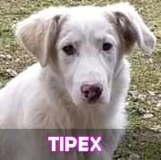 Les adultes de grande taille en Roumanie en un clin d'oeil Tipex13