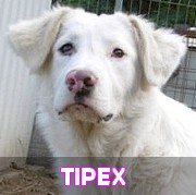 Les adultes de grande taille en Roumanie en un clin d'oeil Tipex15