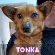 Les loulous handicapés, malades, à la rue ou en urgence vitale en un clin d'oeil Tonka11
