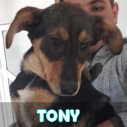 Les chiots en roumanie en un clin d'oeil  Tony10