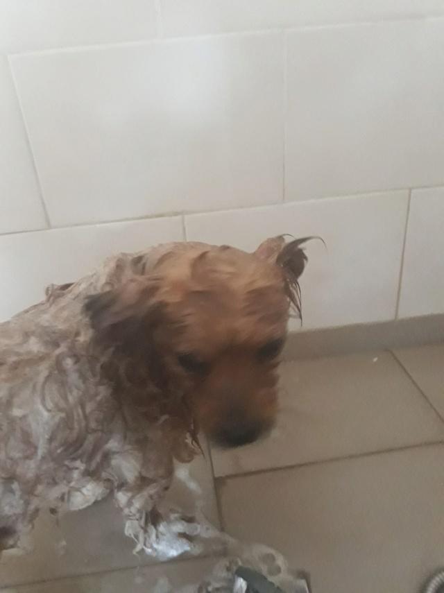 TOTO - petit mâle roux sociable croisé né en 2016 (Pascani) - réservé FA par Fabienne74 (74) - décédé Toto210
