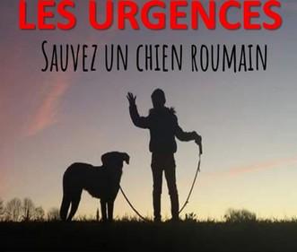 Association Remember Me France : sauver et adopter un chien roumain Urgenc15