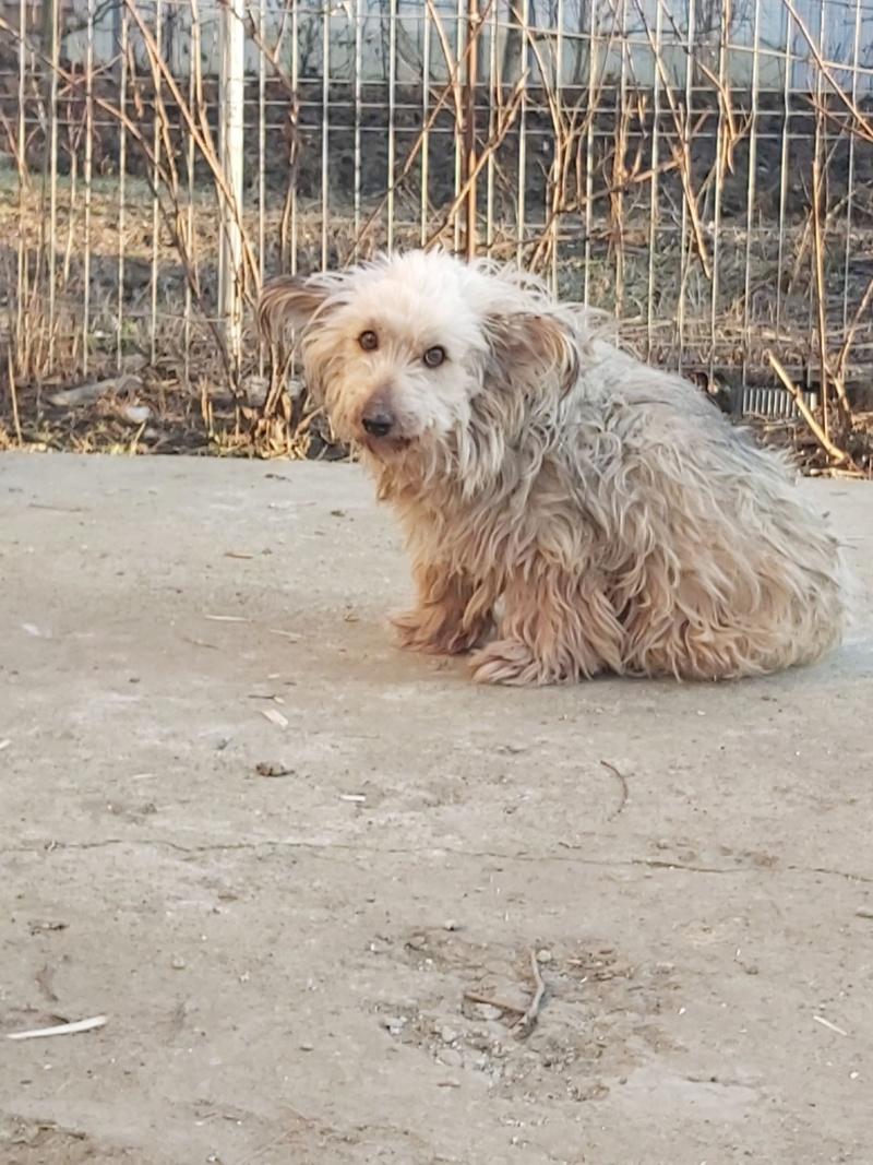 URSULICA - mâle, de petite taille à moyenne - née environ en décembre 2010 - en FA chez Lili à Pascani (Roumanie) - décédé Ursuli24