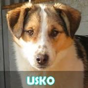 Les adultes de taille moyenne en Roumanie en un clin d'oeil Usko15