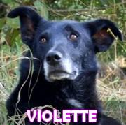 Association Remember Me France : sauver et adopter un chien roumain Violet10