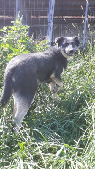 WENEVER - femelle croisée de taille moyenne, née fin 2016 (PASCANI) - REMEMBER ME LAND Weneve26