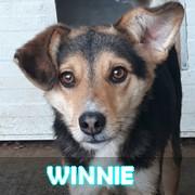 Association Remember Me France : sauver et adopter un chien roumain Winnie21