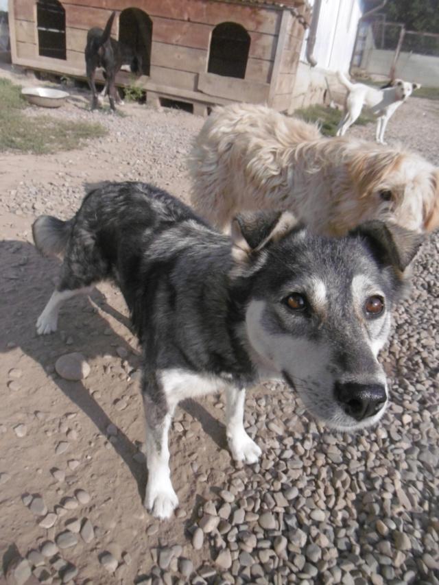 WOLFINE -  femelle croisée de taille moyenne, née en 2012 (PASCANI) - REMEMBER ME LAND Wolfin21