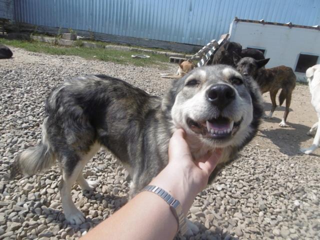 WOLFINE -  femelle croisée de taille moyenne, née en 2012 (PASCANI) - REMEMBER ME LAND Wolfin31