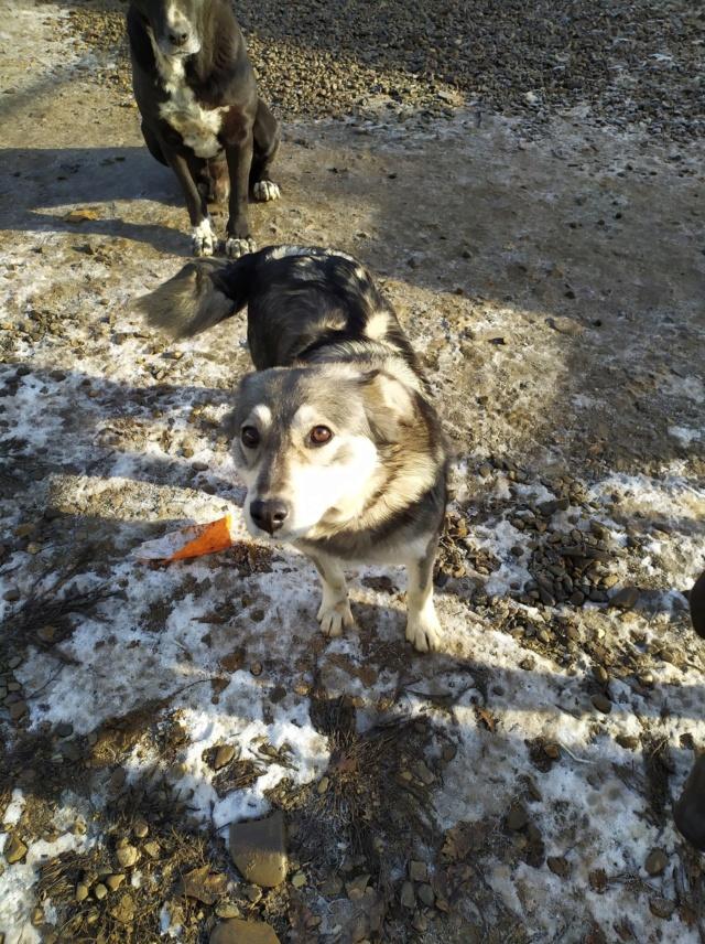 WOLFINE -  femelle croisée de taille moyenne, née environ mi avril 2012 - REMEMBER ME LAND - Adoptée par Remy (68)  Wolfin37