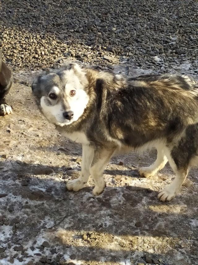 WOLFINE -  femelle croisée de taille moyenne, née environ mi avril 2012 - REMEMBER ME LAND - Adoptée par Remy (68)  Wolfin40