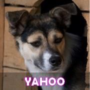 Association Remember Me France : sauver et adopter un chien roumain Yahoo11