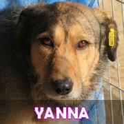 Les adultes de taille moyenne en Roumanie en un clin d'oeil Yanna13