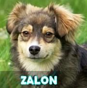Association Remember Me France : sauver et adopter un chien roumain Zalon12