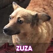 Les adultes de petite taille en Roumanie en un clin d'oeil Zuza10