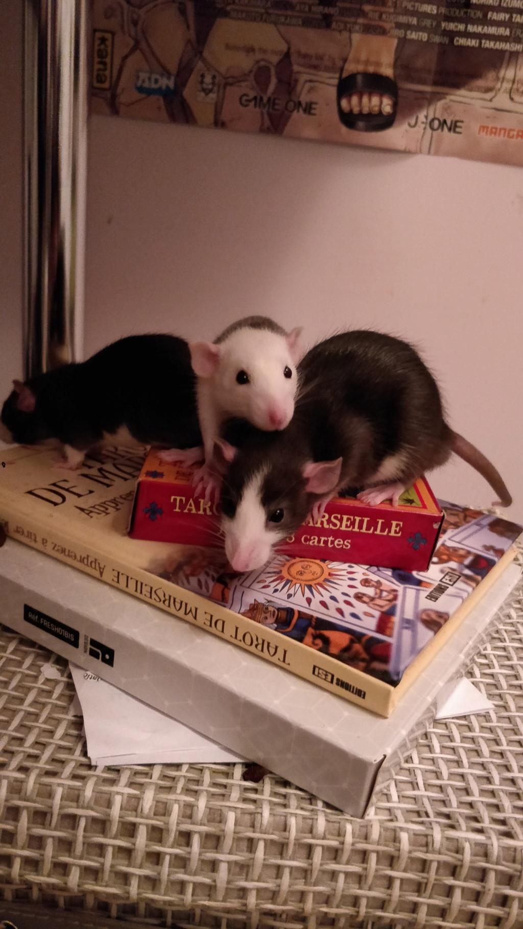 Donne 3 ratons mâles - Oise/Île de France (adoptés) Img_2015