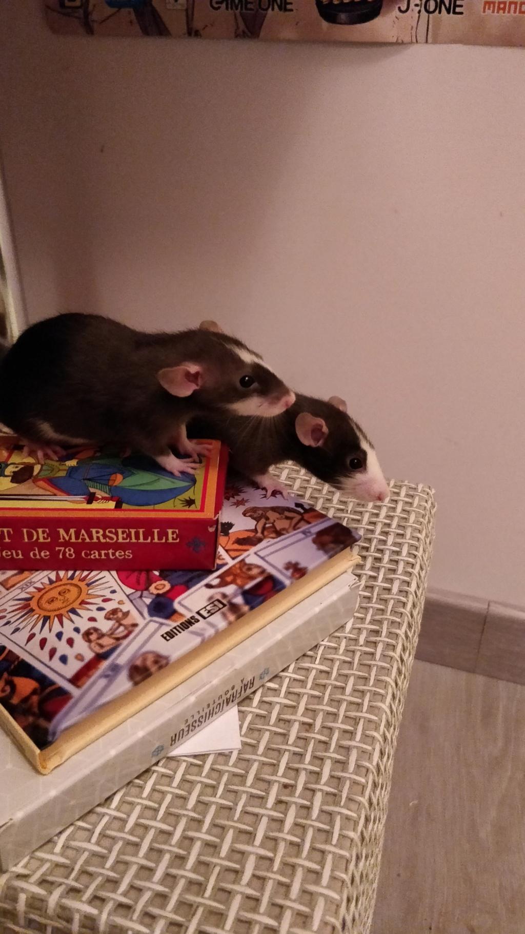 Donne 3 ratons mâles - Oise/Île de France (adoptés) Img_2016