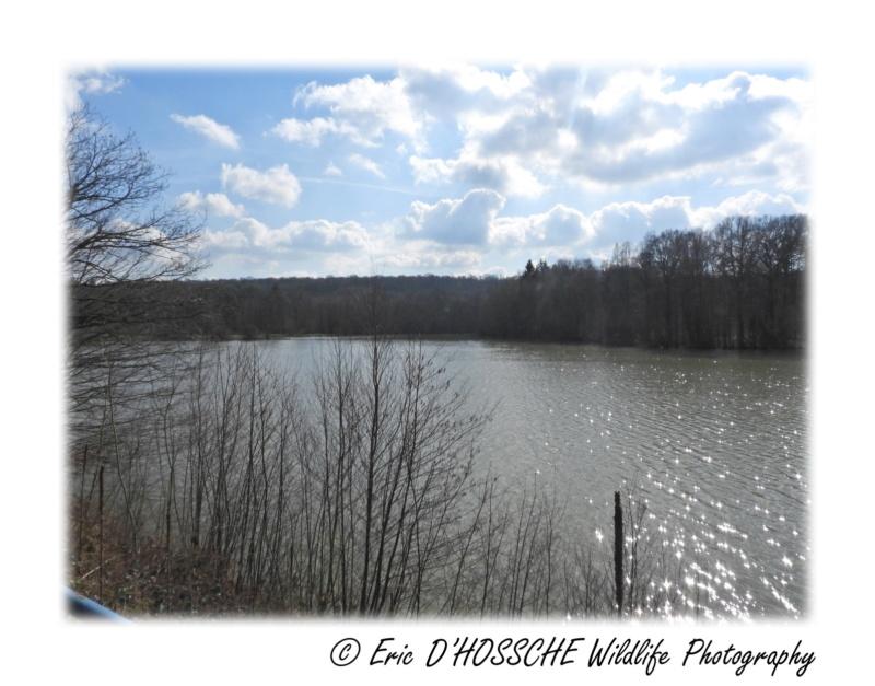 Le Lac du Ry Jaune Nikon_64