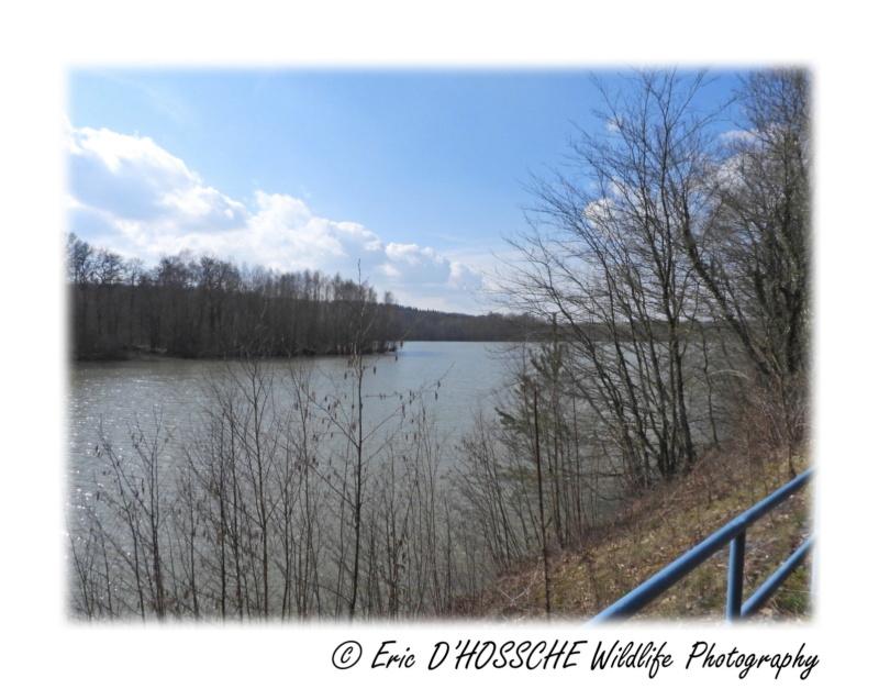Le Lac du Ry Jaune Nikon_66