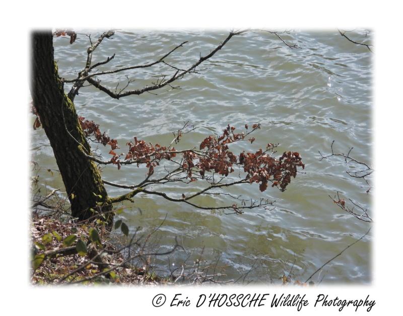 Le Lac du Ry Jaune Nikon_68
