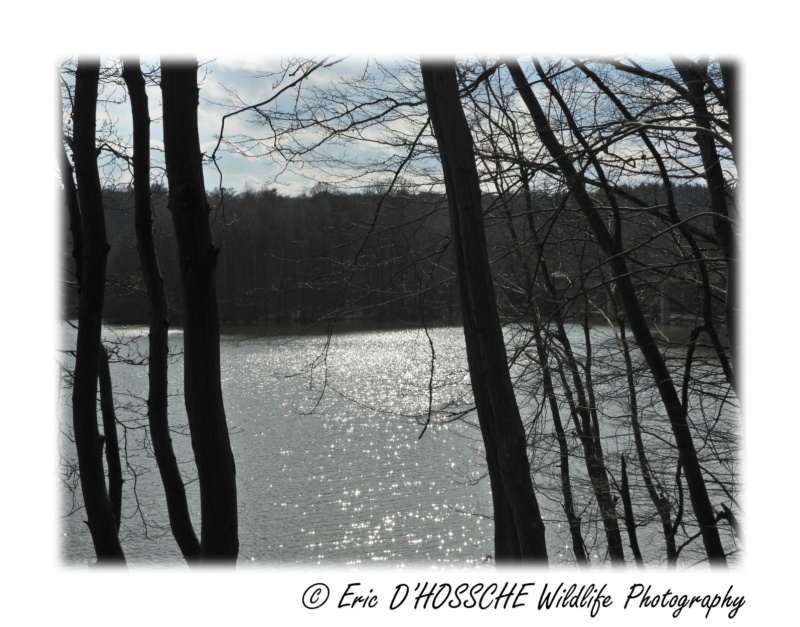 Le Lac du Ry Jaune Nikon_71