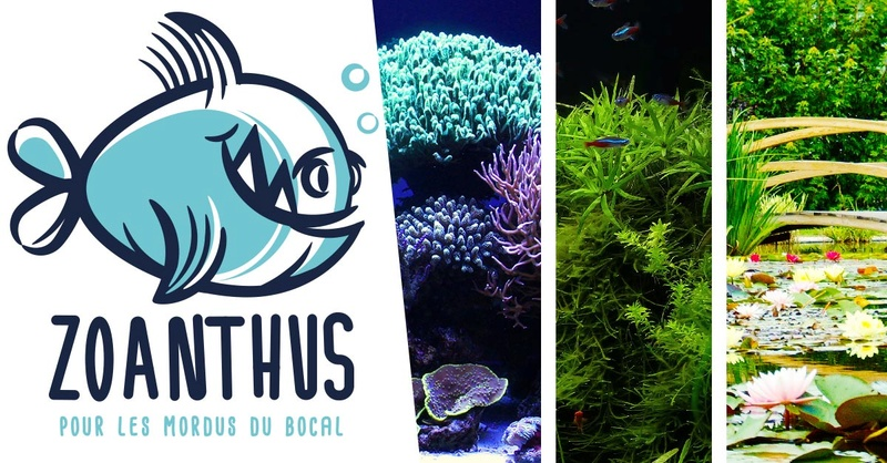 Zoanthus.fr : Nouveau look  et promotion de juin Pubfac10