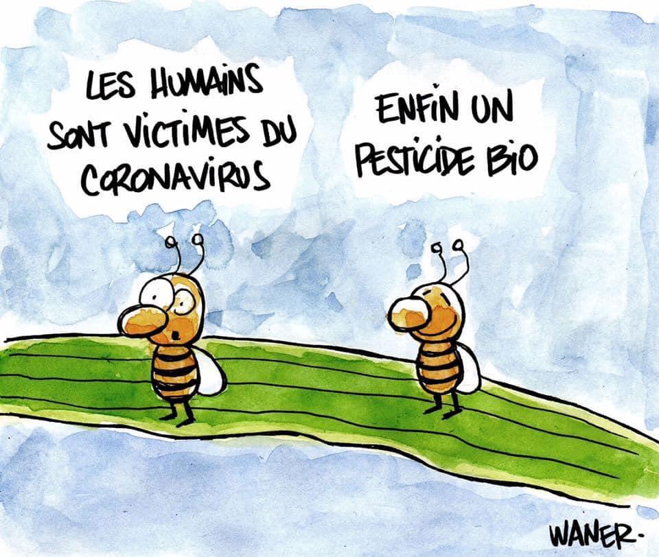 "Le virus ""Covid-19"".  - Page 20 Corona14"