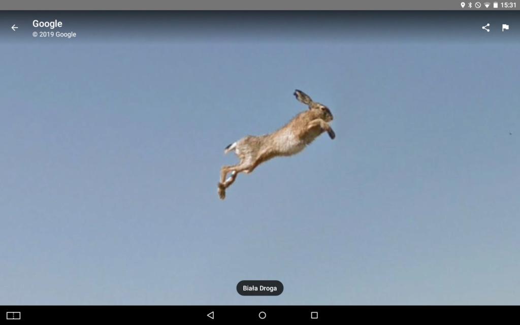 Le coup du lapin vu par la Google car... (Street View ) Screen13