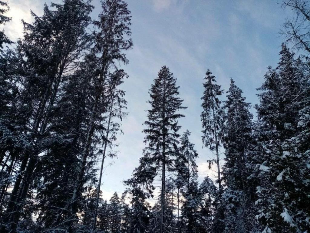 Zimná príroda 13636410