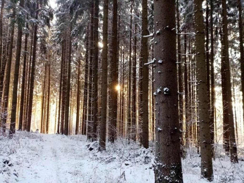 Zimná príroda 13639810