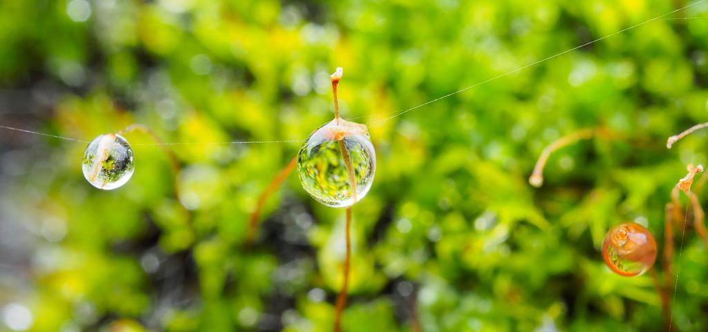 Gouttes de pluie Oly31510