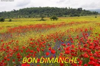 Bonjour -Bonsoir du mois de Juillet - Page 5 Bon_di10