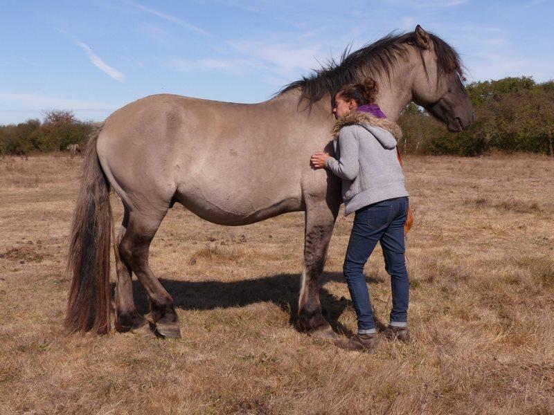 Les grullos bretonnes : Juna et Juno 43007610