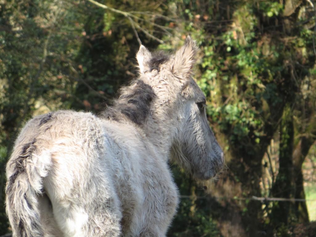 Les grullos bretonnes : Juna et Juno Img_2511