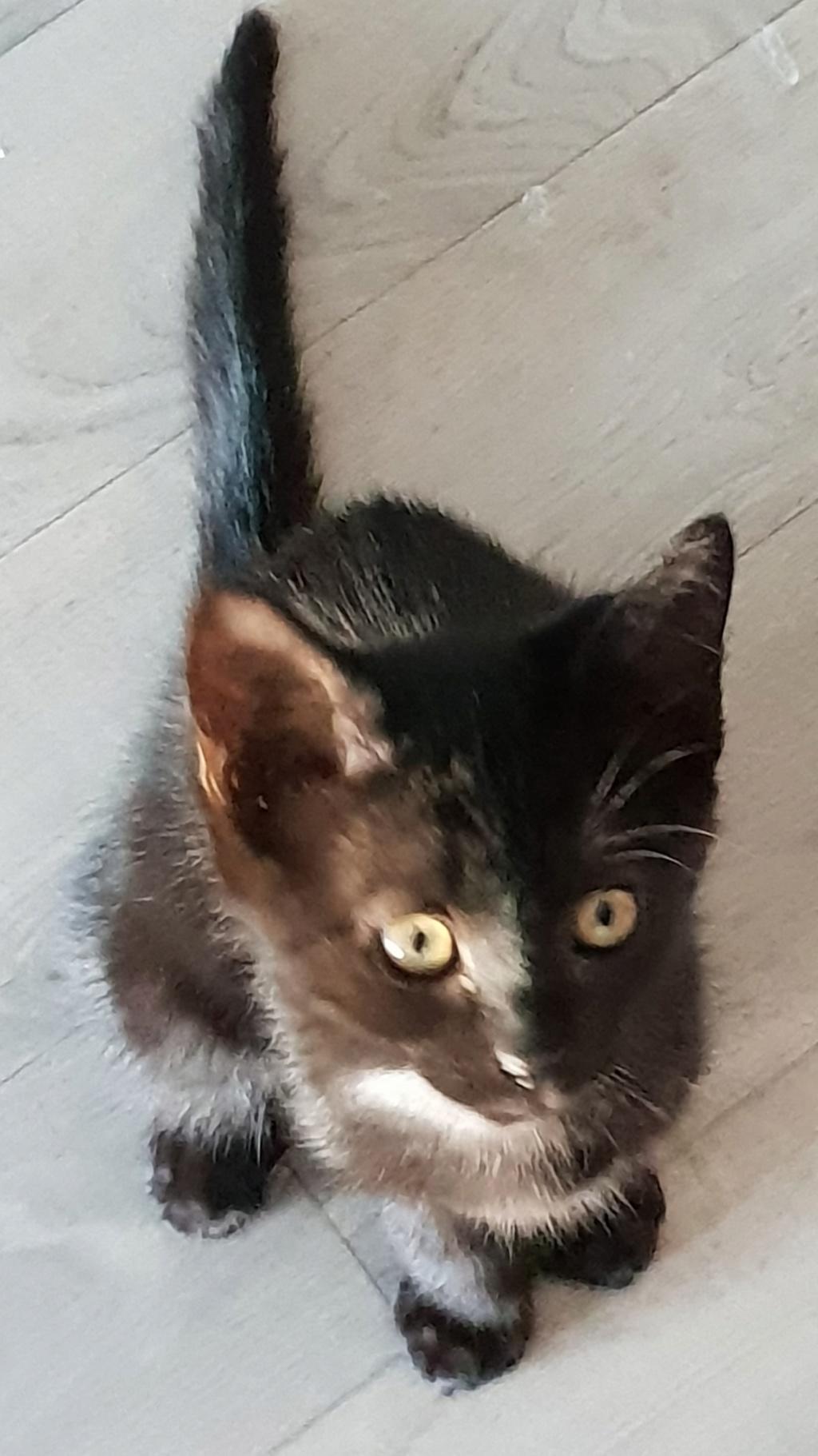 Oxana, chatonne noire, née le 03 mai 2018 20180710
