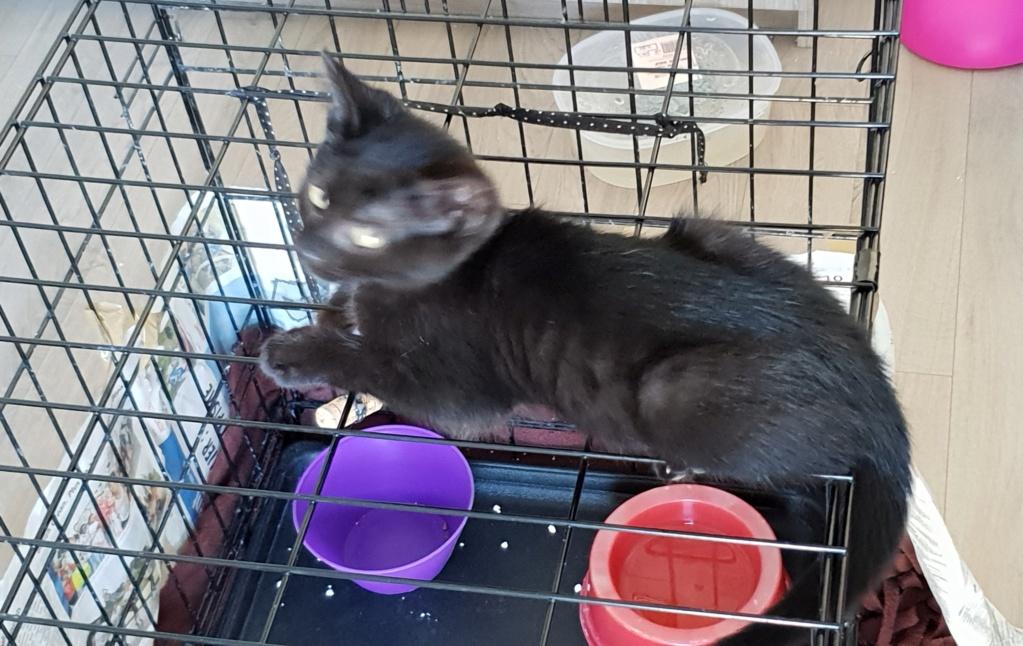Oxana, chatonne noire, née le 03 mai 2018 20180711