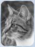 Katzen des vergessenen Tals Abendl12