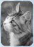 Katzen des vergessenen Tals Frostk11