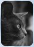 Katzen des vergessenen Tals Mondbl10