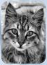 Katzen des vergessenen Tals Sturmj12