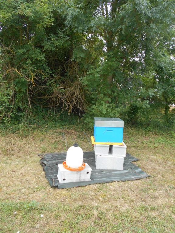 Une nouvelle aventure commence (abeilles) Dscn4010