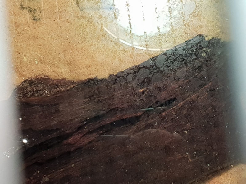 Pellicule blanchâtre à la surface 20181211